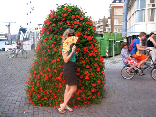 dutch red bush