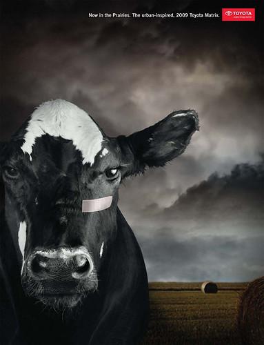 Toyota_Matrix_Cow