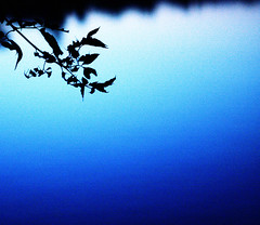 (Y0$HlMl) Tags: blue usa plant water silhouette gradation 5mikesep