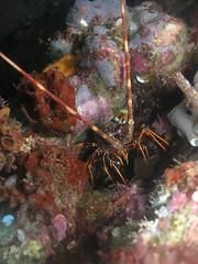 p1010077ca5 (coismarbella) Tags: crustaceos