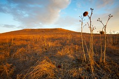 Dried Thistle (Nick Carver Photography) Tags: california park blue sunset summer cloud nature weather yellow horizontal clouds landscape outdoors gold landscapes thistle hill reserve dry brush hills wilderness southerncalifornia orangecounty hillside desolate westcoast irvine quailhill cardoon natureparks wildartichoke ncpfineartprint