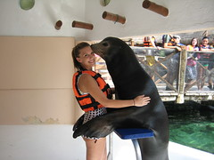 sea lion training (ABC Dolphin Trainer Academy) Tags: animal training dolphin abc sealion academy trainer entrenamiento dolphindiscovery animaltraining positivereinforcementtraining abcanimaltraining