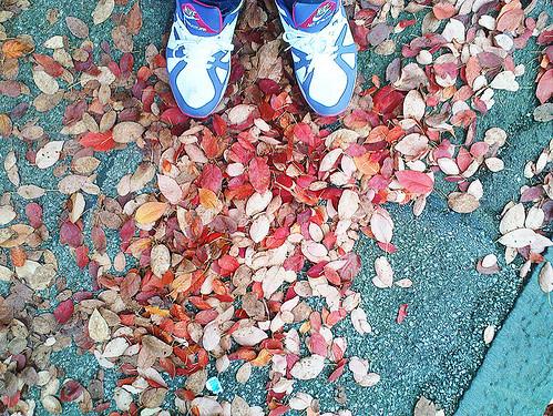 autumn 026