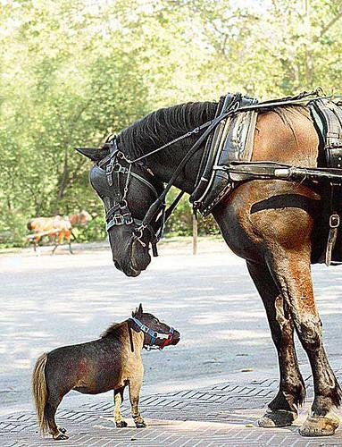 Smallest-Horse