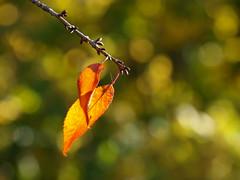 photo(23lx) (Iosif Solomon) Tags: nature gradina botanica cluj clujnapoca autumn toamna olympus e420 zuiko 70300 flickr