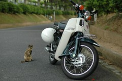 my Super Cub and an alley cat (by cotaro70s)