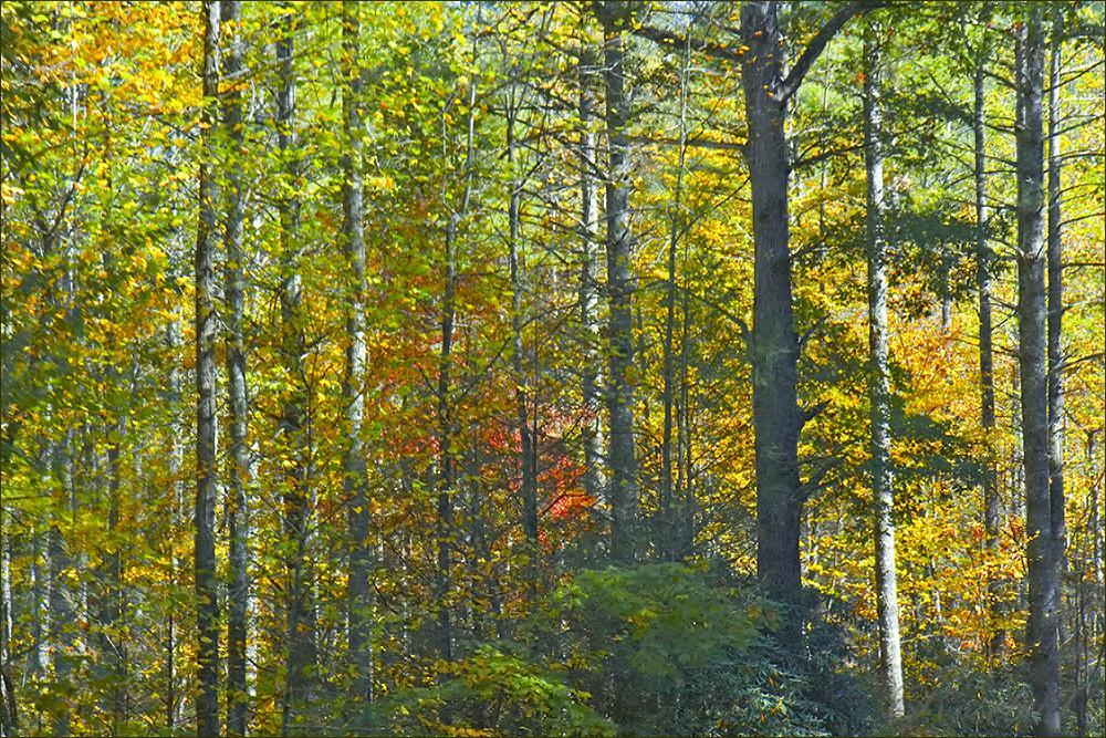 trees ©2008 RosebudPenfold