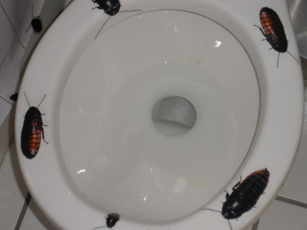 Farmstaticflickrcoma - Cockroach in bathroom