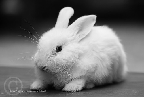 very cute rabbit