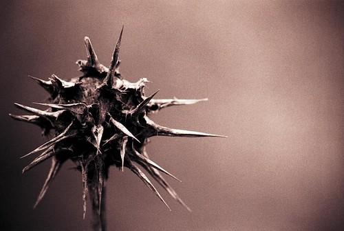 La naturaleza hace daño IV/Nature hurts IV