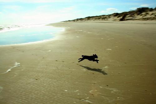 Run Poodle Run - IMG_0343