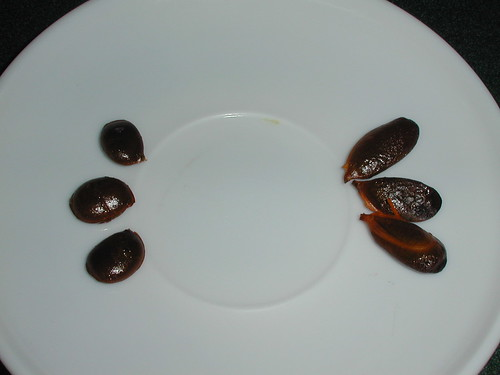 Wild persimmon seeds + fuyu persimmon seeds