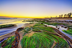 Low Tide at Surfers Point - HDR (Amery Carlson) Tags: ocean california sunset seascape seaweed beach landscape kelp lowtide hdr highdynamicrange ventura surferspoint specland d700 dynamicphotohdr 1424mm
