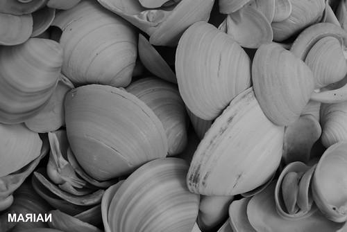 caracoles. caracoles de mar