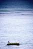 I Feel Blue (Khaled A.K) Tags: blue sea seascape water rock seagull gull sa jeddah saudiarabia khaled waterscape ksa saudia jiddah ifeelblue nikond300 kashkari
