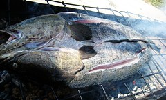 BBQ fish  (MelindaChan ^..^) Tags: china food fish yummy yum cook bbq mel burn seafood xinjiang barbeque  melinda korla bbqfish  bostenlake chanmelmel  melindachan