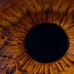 Iris Humano