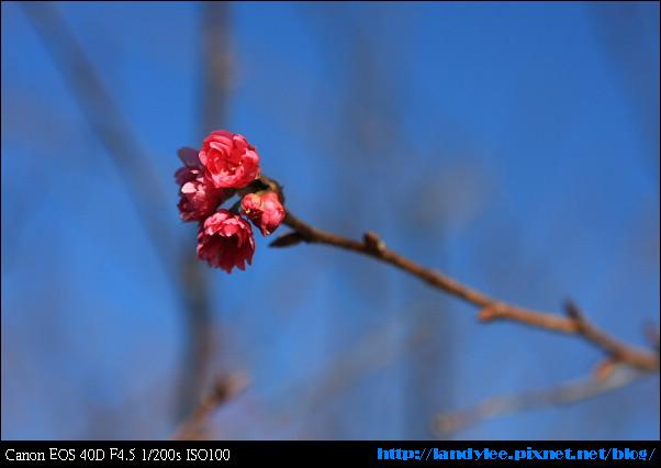 9711-新社花海:Date with Bee_053.jpg