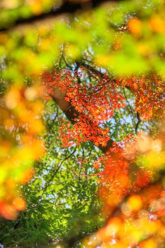 宮代の秋をHDRイメージで