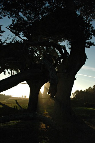 The History of Enlightened Trees, Monterey cypress, Santa Cruz, California, USA by Wonderlane