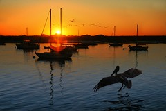 Morro Bay Sunset.jpg (YOSEMITEDONN) Tags: sunset pelicans boats morrobay arealgem