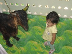 Marziyas First Bakra Idd by firoze shakir photographerno1