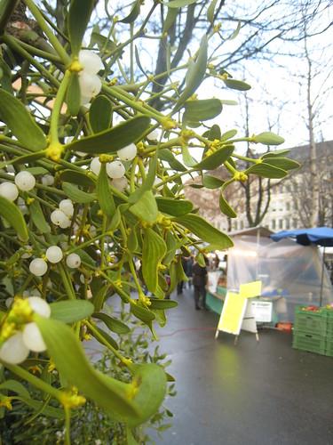Misteln (Mistletoe), Zürich, Switzerland