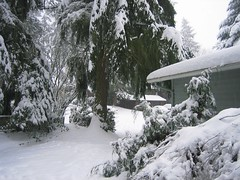 It doesn't show signs of stopping! (hopeisalot) Tags: our house wintersolstice kenmore bothell winterinwashington snowinbothell winterinthepacificnorthwest snowinthepacificnorthwest snowinwashinton