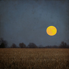 Cold Moon (SOMETHiNG MONUMENTAL) Tags: trees winter moon texture nature field photoshop landscape farm longnightsmoon coldmoon somethingmonumental mandycrandell