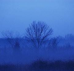 Christmas Eve Fog (Scott Hudson *) Tags: usa nature fog landscape photography nikon flickr unitedstatesofamerica nj scene pg pip noediting googleimages scotthudson flickrtoday exploreflickr imagekind mywinners bighugelabs nikond40 betterthangood hillsboroughnewjersey goldstaraward beginnerdigitalphotographychallengewinner december24th2008 christmasevefog foglooksbetterviewedonblack copyrighted2009allrightsreserved copyright2009shudson perfectioninpictures bingimages alwaysbetteronblack betterthangoodflickr scotthudsonflickr httpwwwfacebookcomscotthudsoninnjflickr