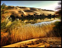 Umm El-Ma'a Oasis Lake ! (Bashar Shglila) Tags: lake sahara desert oasis libya wadi umm  maa   libyen   ubari lbia libi libiya alhaya awbari liviya libija platinumheartaward  flickrlovers      lbija  lby libja lbya liiba livi   elmaa
