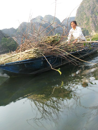 Hauling sticks by boat, Tam Coc, Vietnam