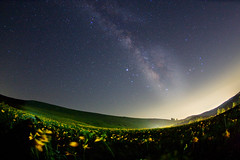 Galactic clusters land (masahiro miyasaka) Tags: flowers flower yellow night canon stars iso3200 star fisheye yellowflower galaxy astrophotography wallpapers oneshot milkyway hemerocallidaceae alemdagqualityonlyclub milkywayrailroad