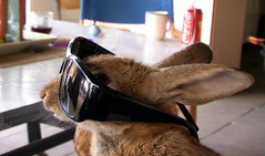 Rabbit Reaching Out (angeliou56) Tags: rabbit bunny easter glasses bolle
