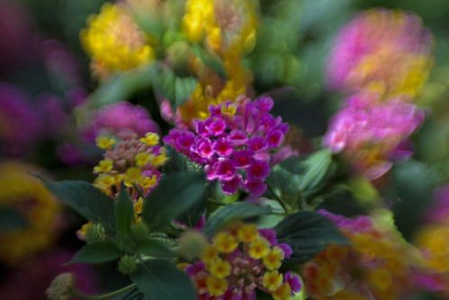 Thwaite Flower 4