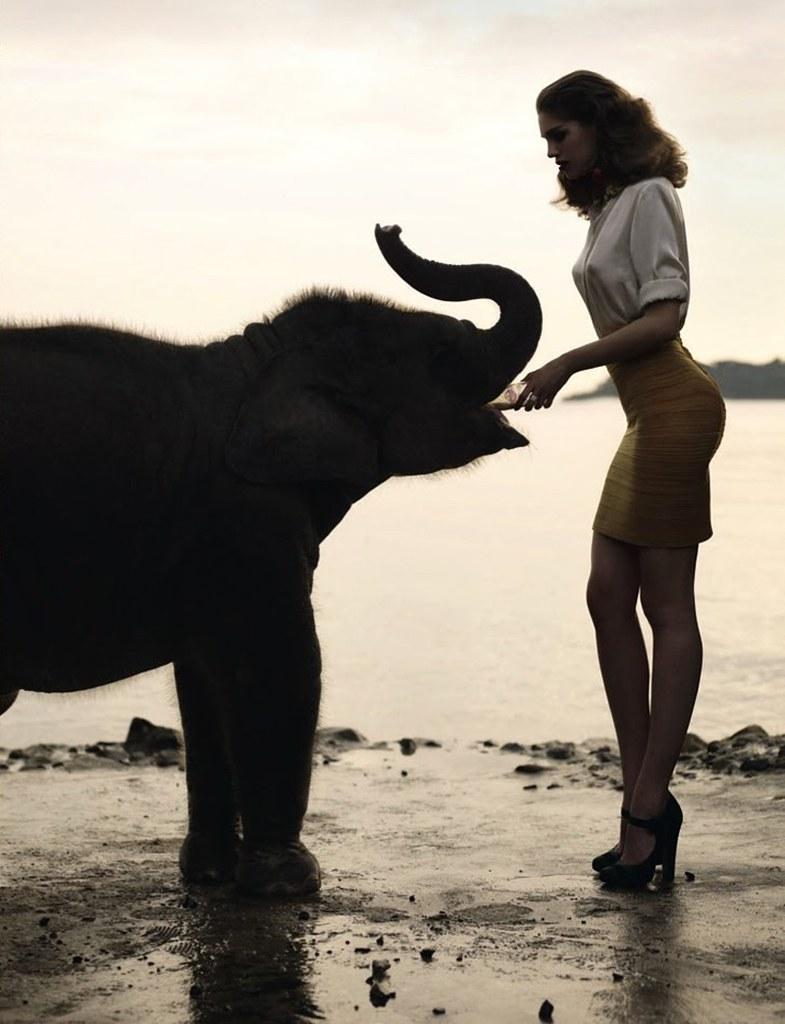 Elephant-Pop-23-3