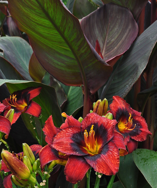 Cannas and Daylilies 2