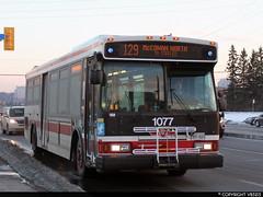 Toronto Transit Commission #1077 (vb5215's Transportation Gallery) Tags: toronto ttc 2006 transit orion commission vii hev