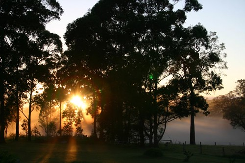 Early morning ligth in Bodalla, NSW.