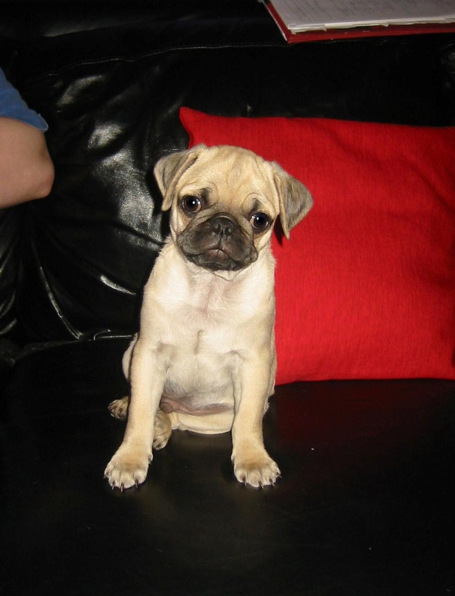 Frank - 3 months old