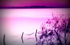 Great Salt Lake in Utah at Sunset (mbell1975) Tags: pink sunset usa sun lake water rose utah ut dusk great over salt saltlake greatsaltlake ilobsterit