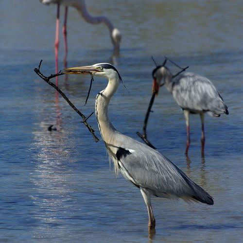 Ornithologic #1