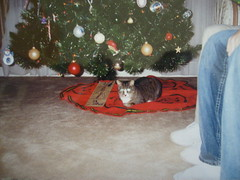 Snickers Under the Christmas Tree