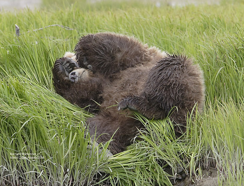 Monday Morning Bear IMG_4997