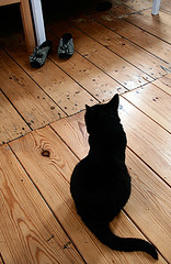 contemplation (jana shea) Tags: cat omgshoes kleinepoes