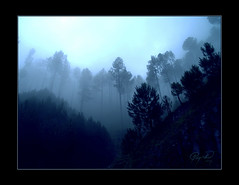 Forrest Mist & Morning (IshtiaQ Ahmed (is Back)) Tags: pakistan valley kaghan balakot