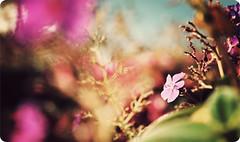 The first flower (manlio_k) Tags: canon geotagged losangeles dof bokeh gettymuseum manlio castagna 400d roundedborders manliocastagna myfirstflowerphoto manliok