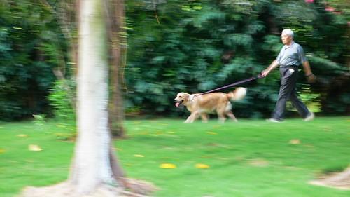 20080825 老人与狗