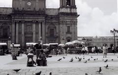 (Rai 幻の光) Tags: street camera white black art film church 35mm canon cathedral guatemala pigeons catedral rangefinder oldschool 100 canonet ql17 giii chs centralamerica emulsion vendors parquecentral centroamerica guatemalacity adox cuidaddeguatemala