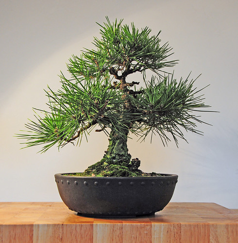 View bonsai